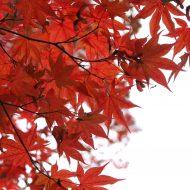 jesień w ogrodzie www.morguefile.com