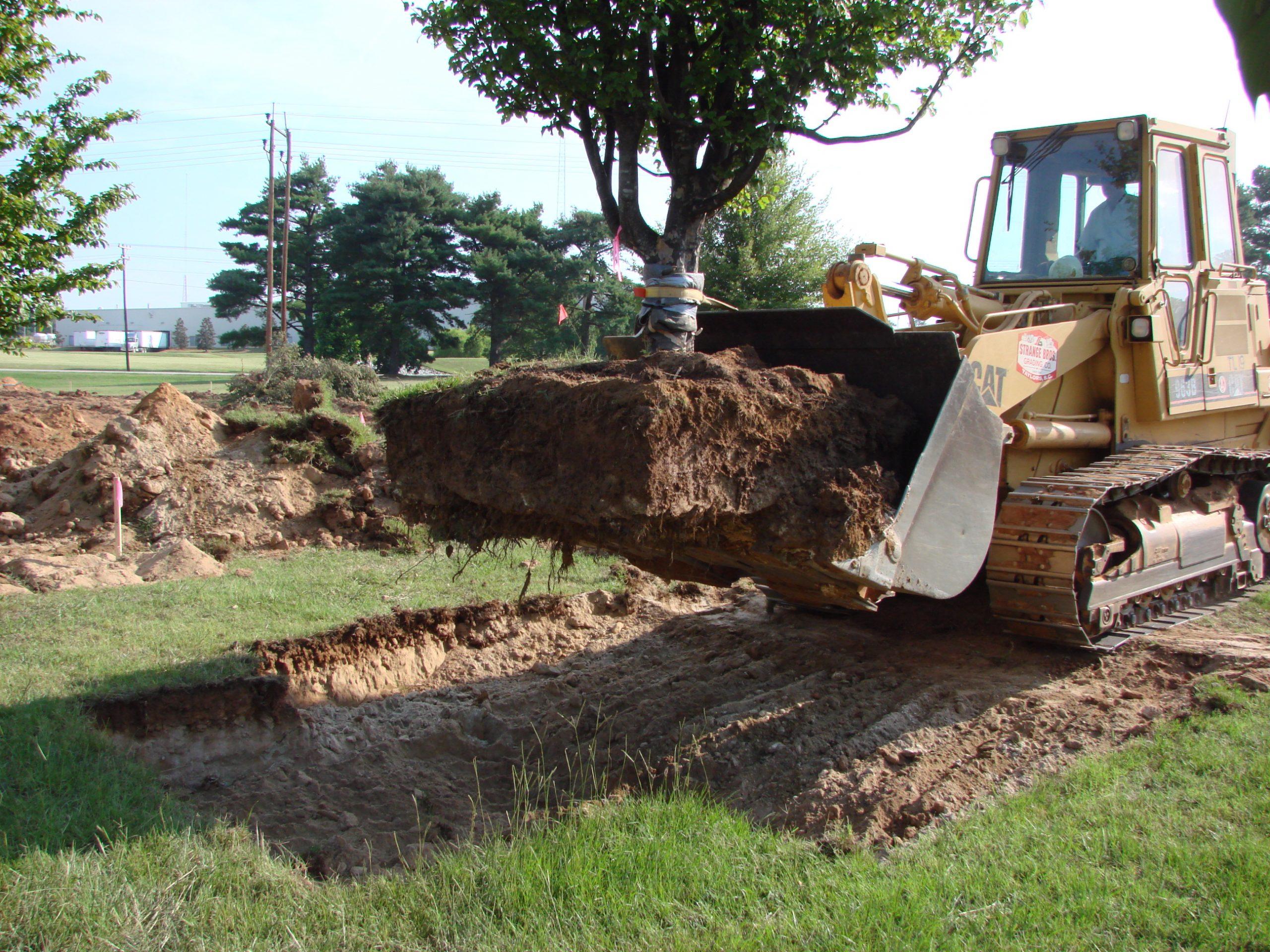 przesadzanie dorosłych drzew www.morguefile.com