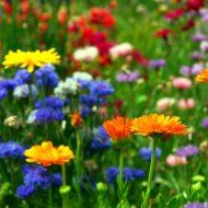 Łąka zamiast kwiatów