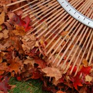 grabienie liści www.sxc.hu
