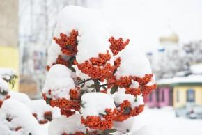 zima w ogrodzie www.sxc.hu
