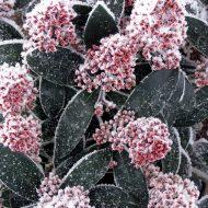 rośliny zimą www.sxc.hu