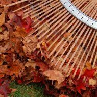 Tradycyjne grabienie liści może być kłopotliwe www.sxc.hu