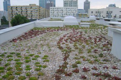 Dach płaski z ogrodem