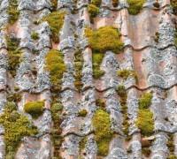 Dachówka pokryta mchem