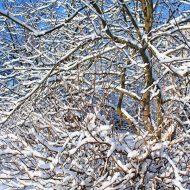 Drzewo w zimie