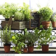 zioła w doniczkach na balkonie