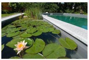 ekologiczny staw kąpielowy